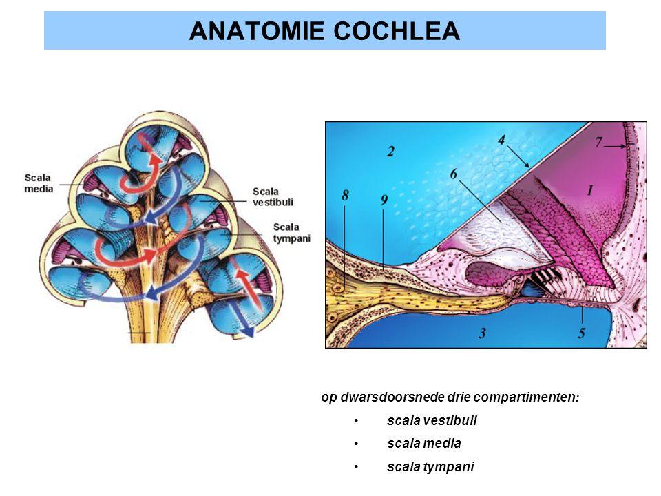 ANATOMIE COCHLEA op dwarsdoorsnede drie compartimenten: