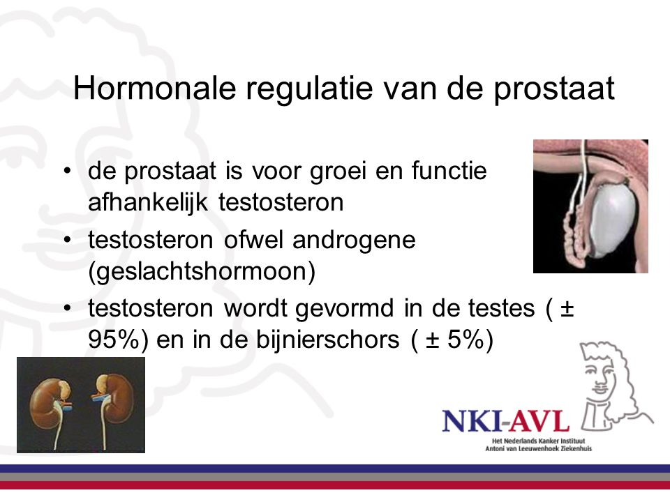 Hormonale regulatie van de prostaat
