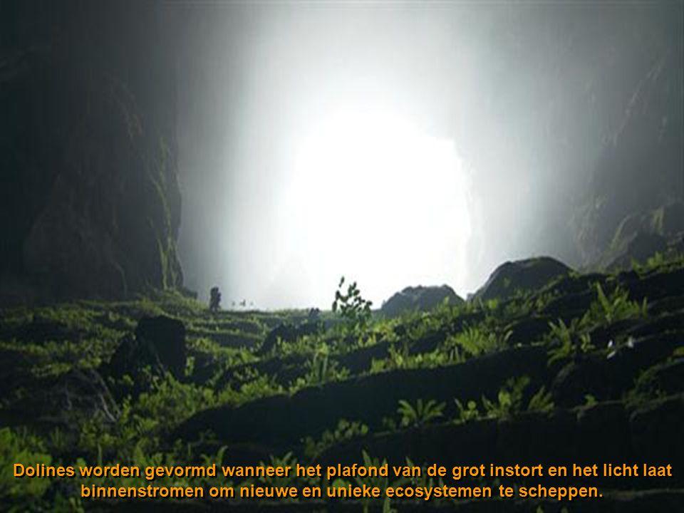 Dolines worden gevormd wanneer het plafond van de grot instort en het licht laat binnenstromen om nieuwe en unieke ecosystemen te scheppen.