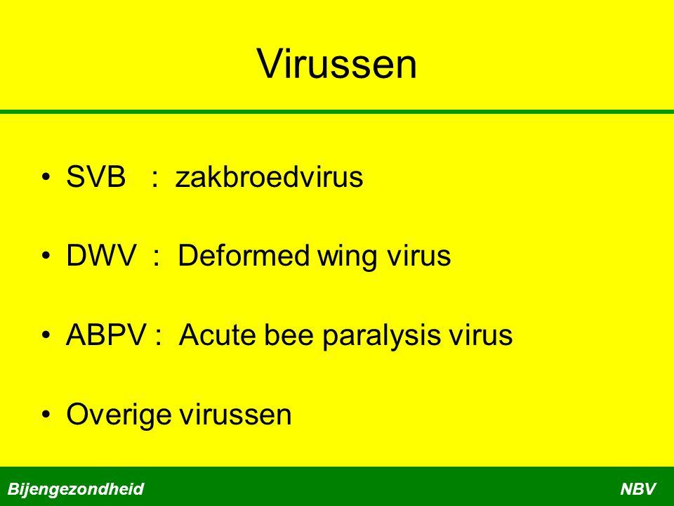 Virussen SVB : zakbroedvirus DWV : Deformed wing virus