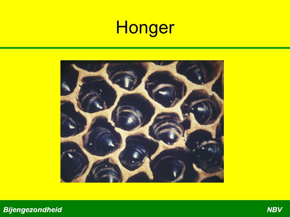 Honger Bijengezondheid NBV