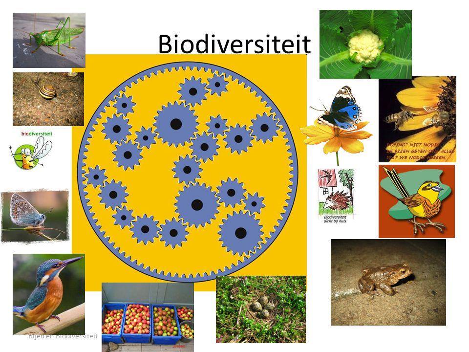 Biodiversiteit Bijen en Biodiversiteit