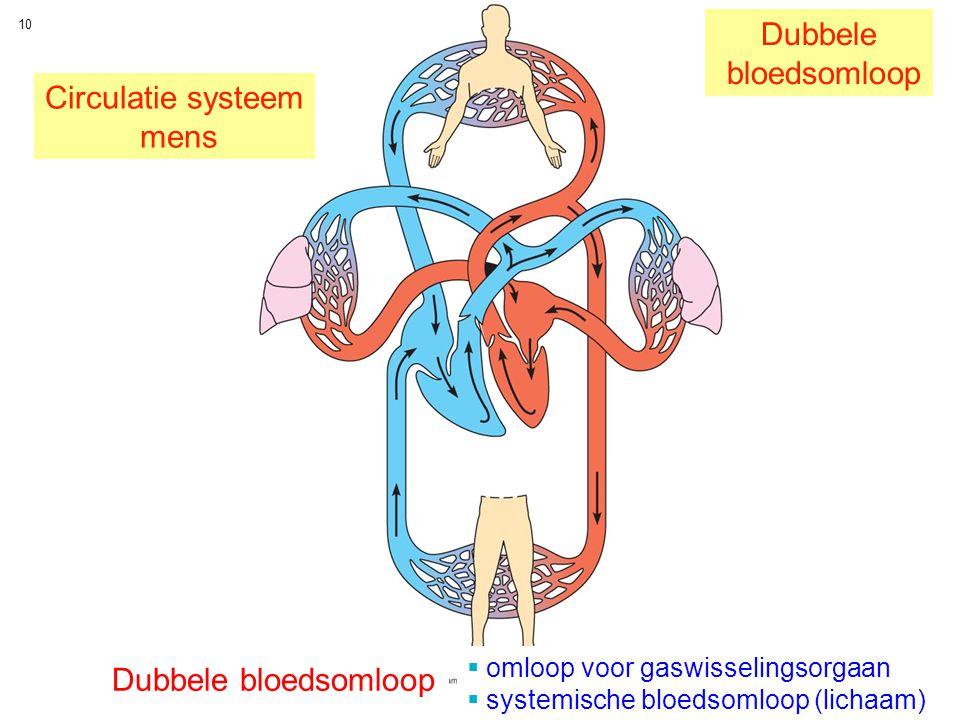 Dubbele bloedsomloop Circulatie systeem mens Dubbele bloedsomloop