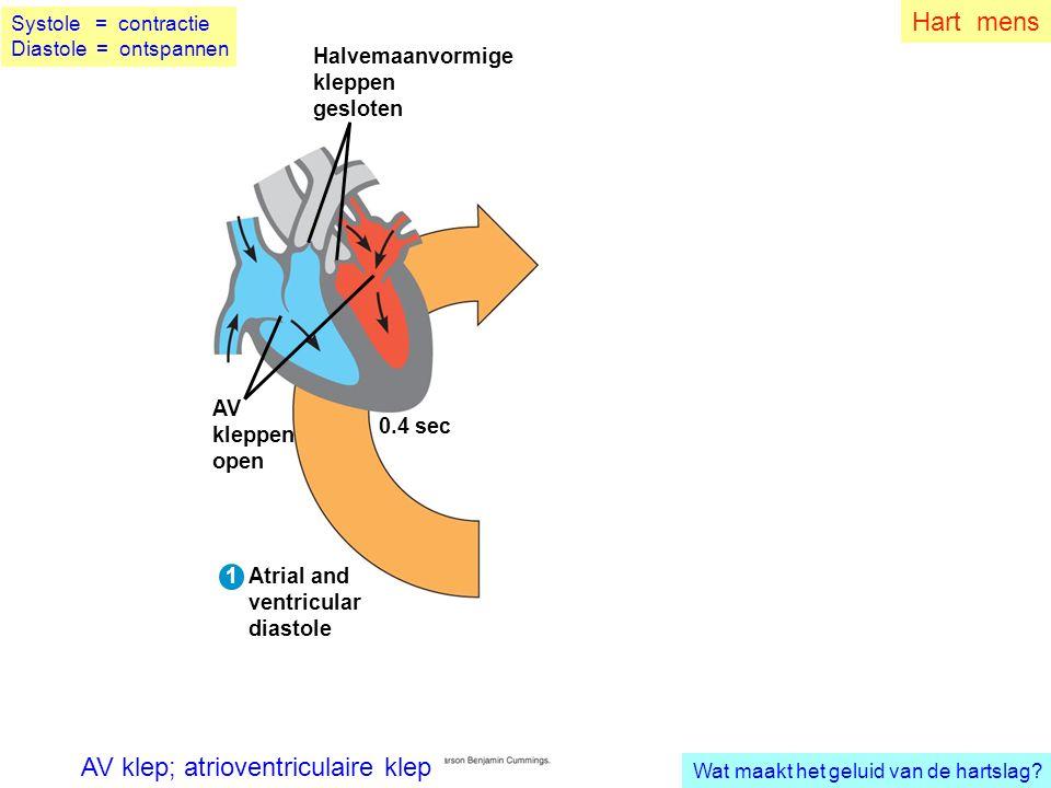 AV klep; atrioventriculaire klep