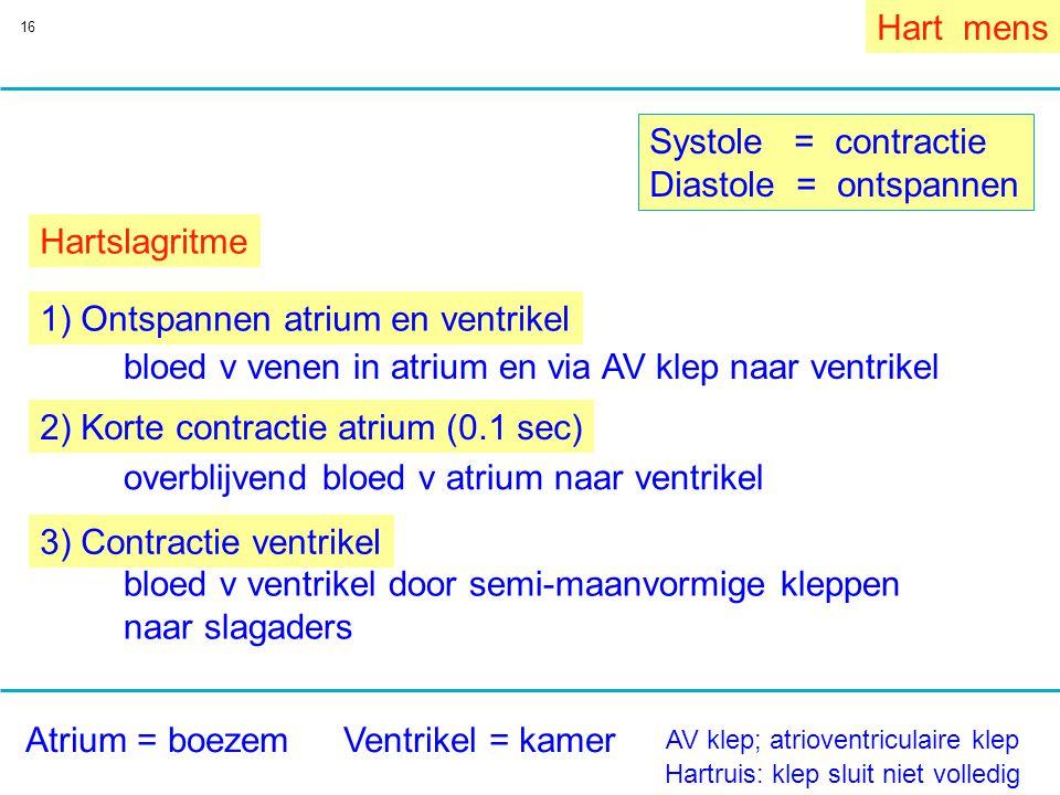 1) Ontspannen atrium en ventrikel