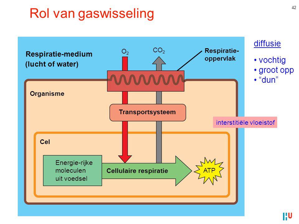 Cellulaire respiratie
