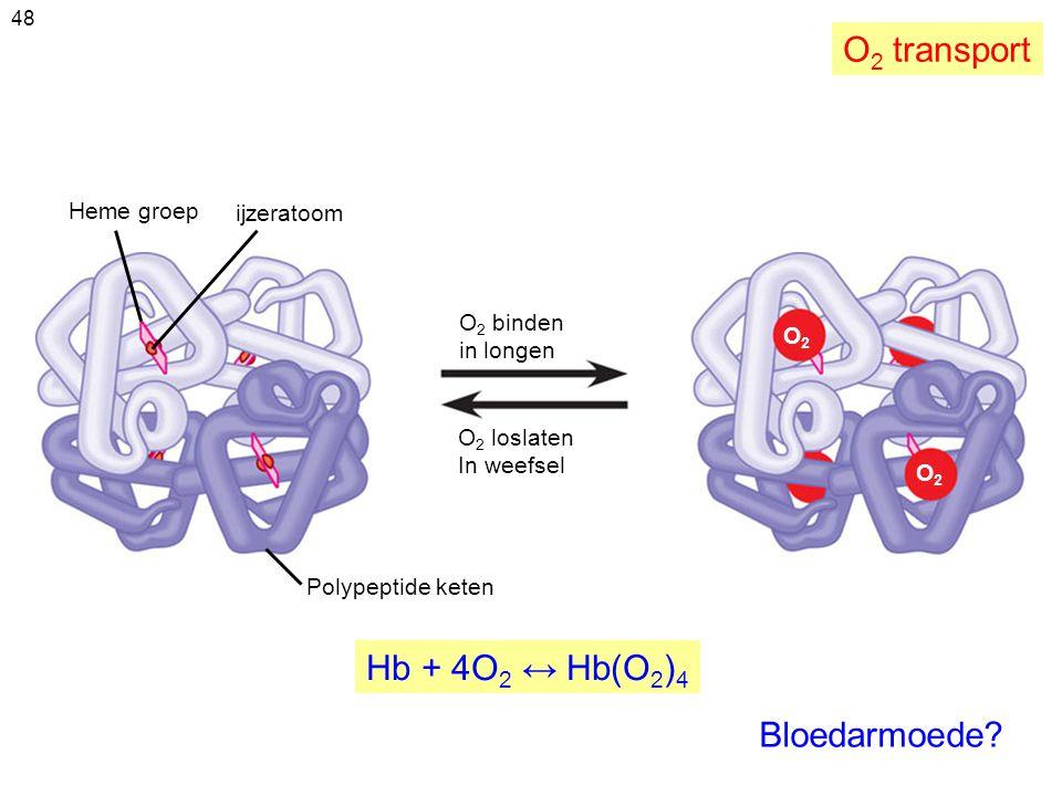 O2 transport Hb + 4O2 ↔ Hb(O2)4 Bloedarmoede Heme groep ijzeratoom