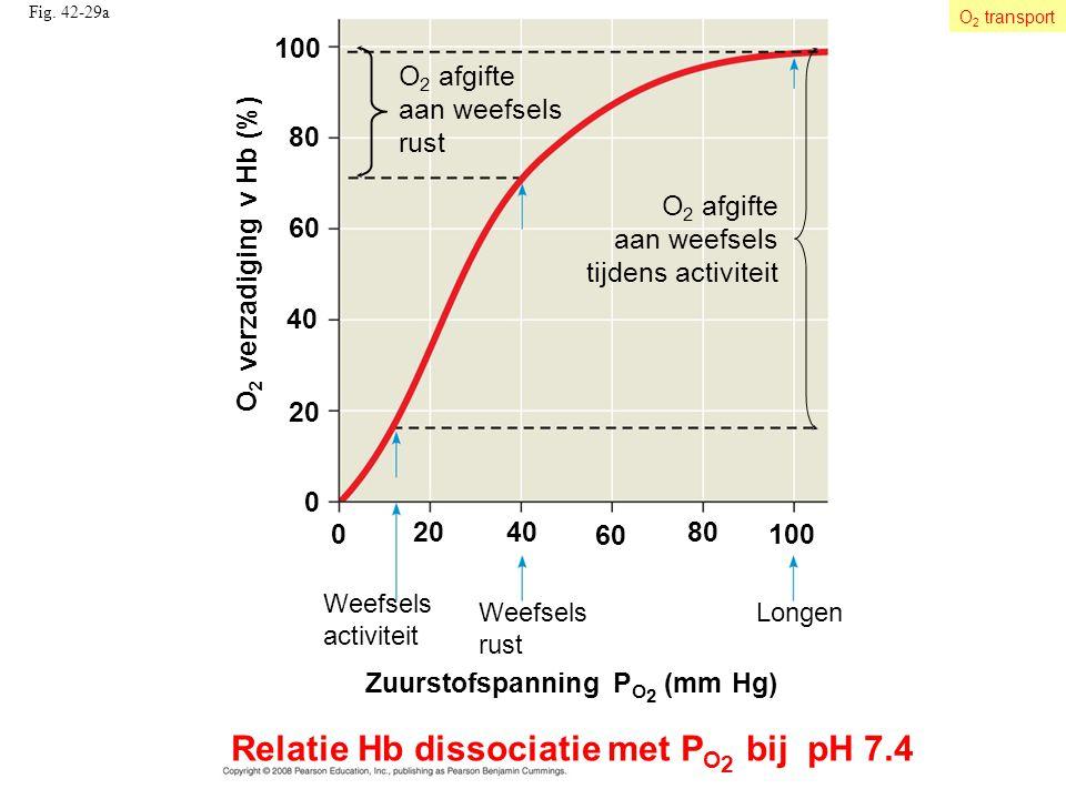 Relatie Hb dissociatie met PO2 bij pH 7.4