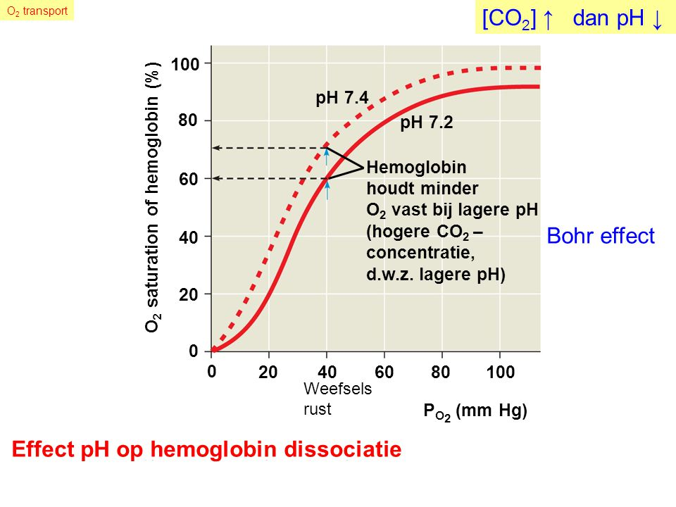 Effect pH op hemoglobin dissociatie