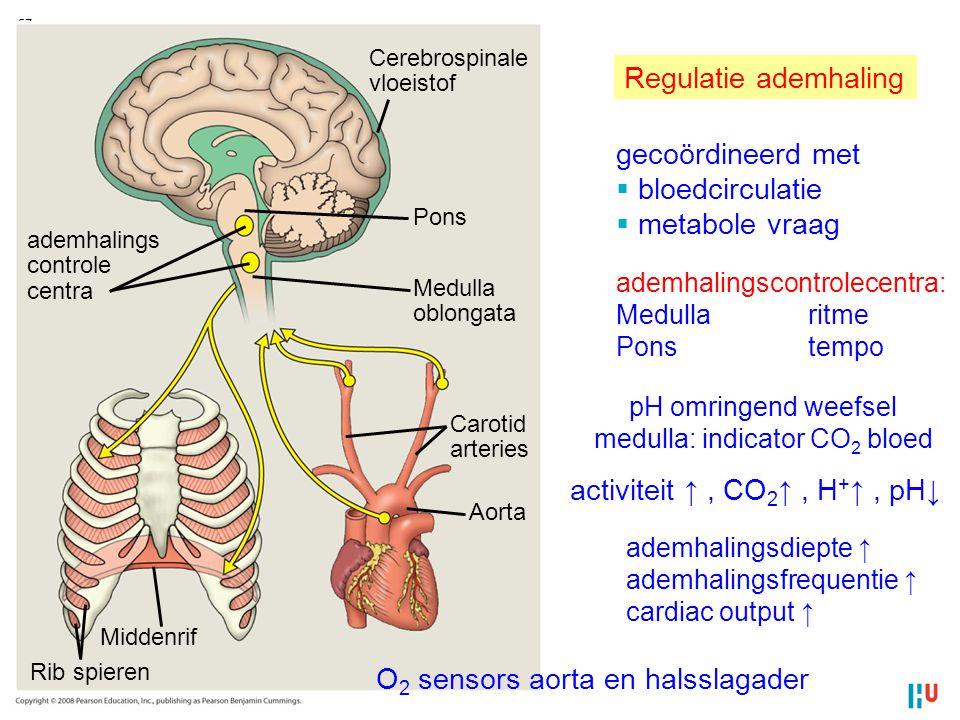 medulla: indicator CO2 bloed