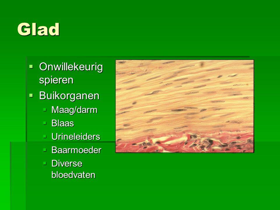 Glad Onwillekeurig spieren Buikorganen Maag/darm Blaas Urineleiders