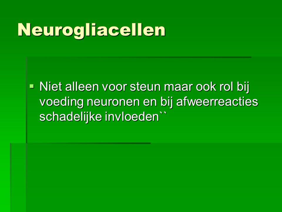 Neurogliacellen Niet alleen voor steun maar ook rol bij voeding neuronen en bij afweerreacties schadelijke invloeden``