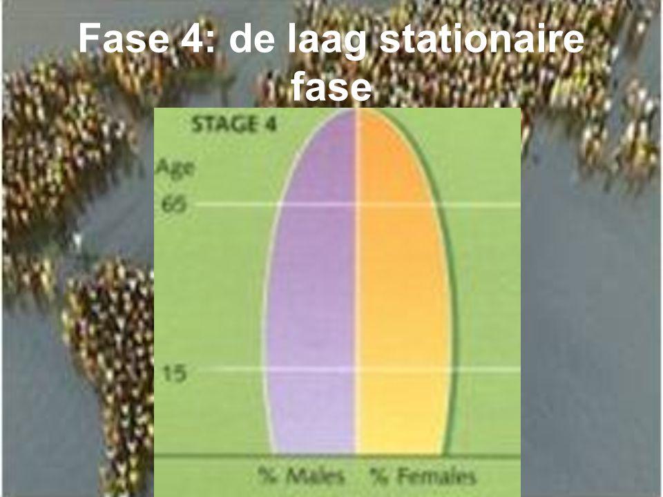 Fase 4: de laag stationaire fase
