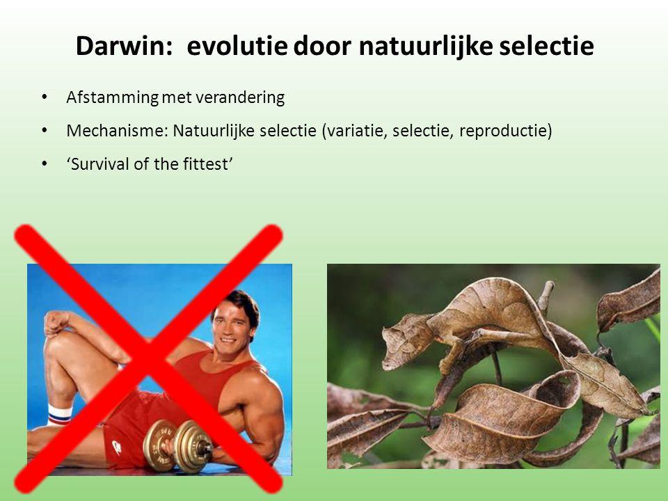 Darwin: evolutie door natuurlijke selectie