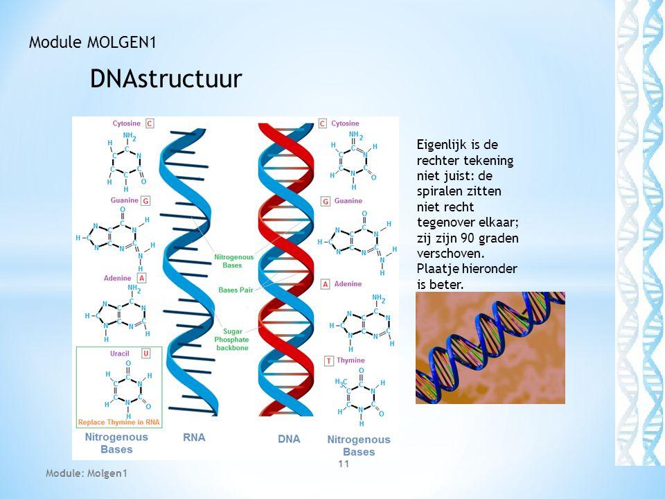 DNAstructuur Module MOLGEN1