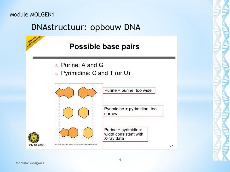 DNAstructuur: opbouw DNA