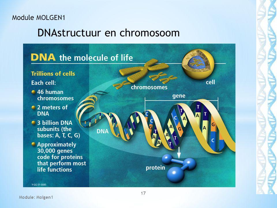 DNAstructuur en chromosoom