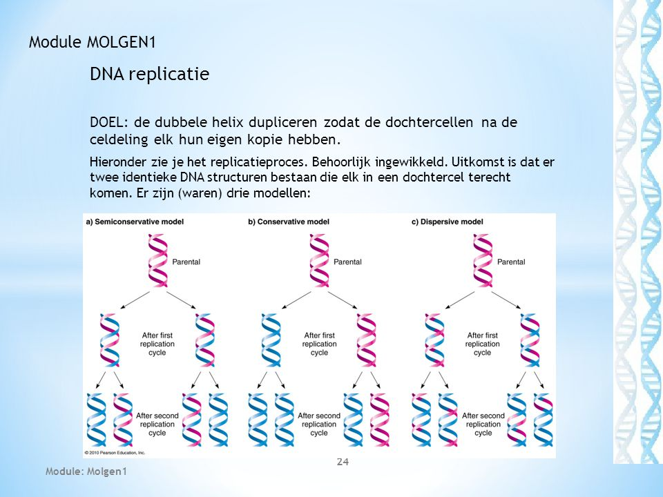 DNA replicatie Module MOLGEN1