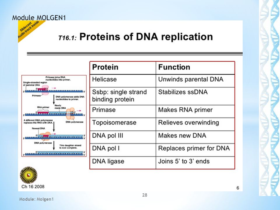 Module MOLGEN1 Module: Molgen1