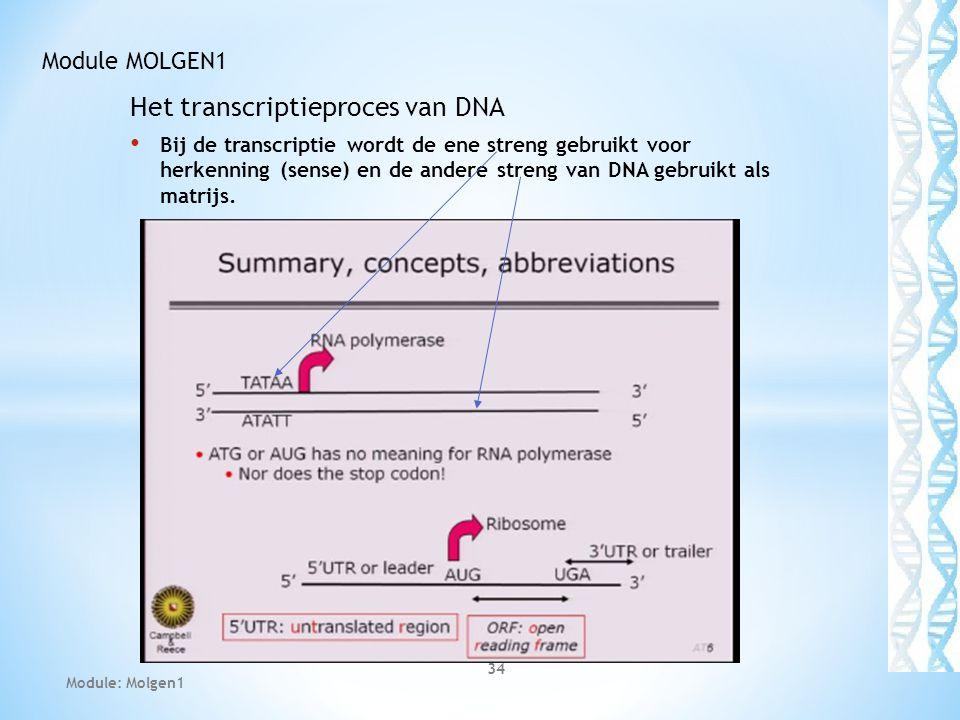 Het transcriptieproces van DNA