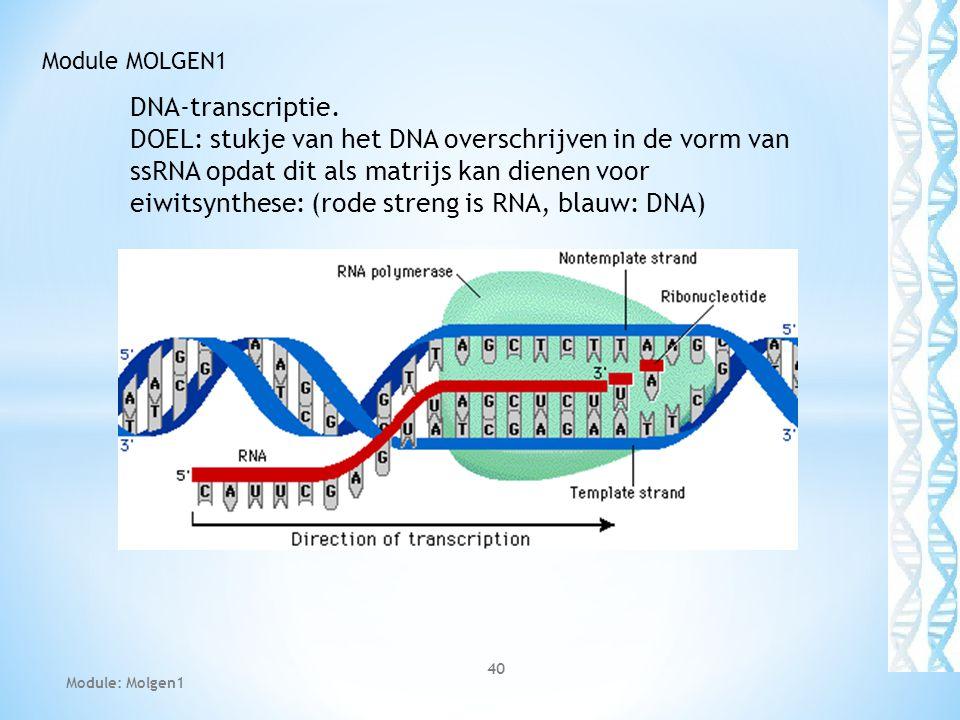 Module MOLGEN1