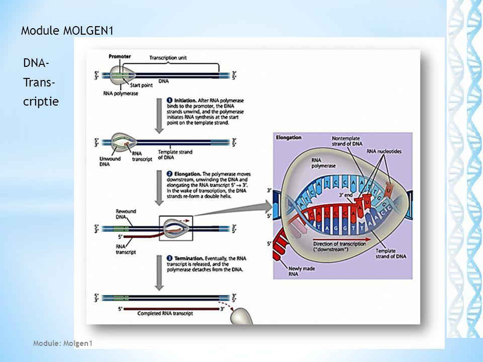 Module MOLGEN1 DNA- Trans- criptie Module: Molgen1
