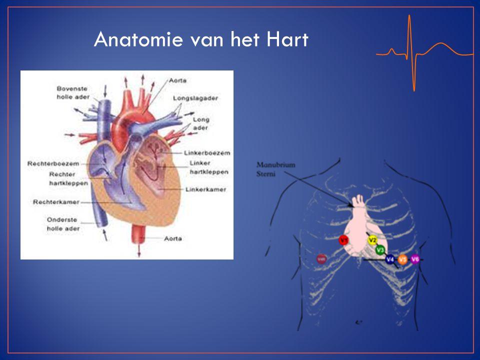 Anatomie van het Hart Plaatsing Electroden: Extremiteiten Armen li/re