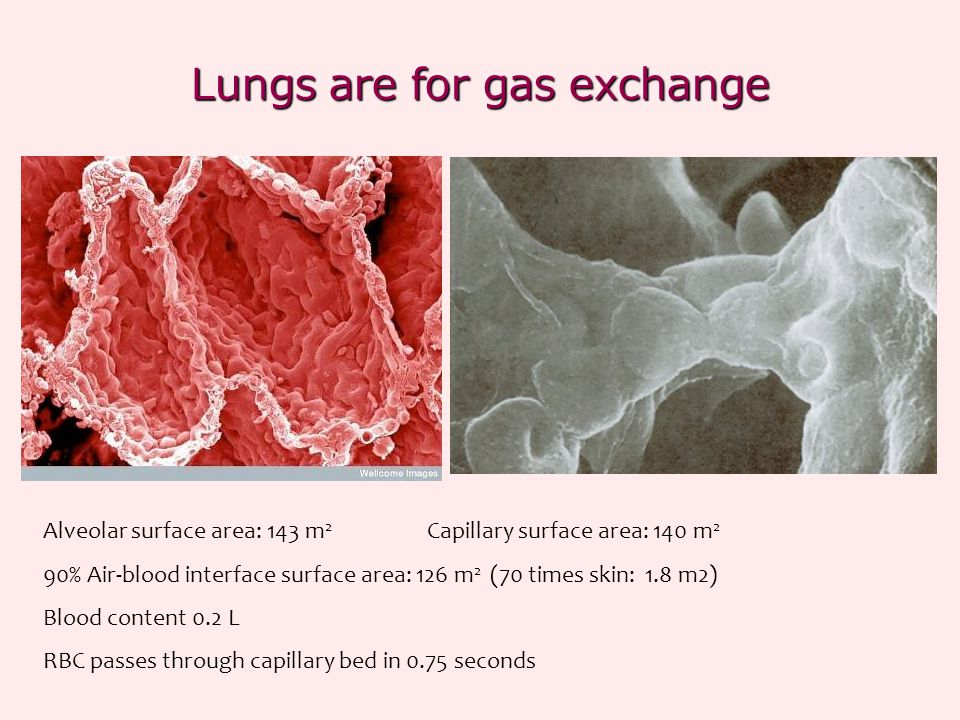 Lungs are for gas exchange