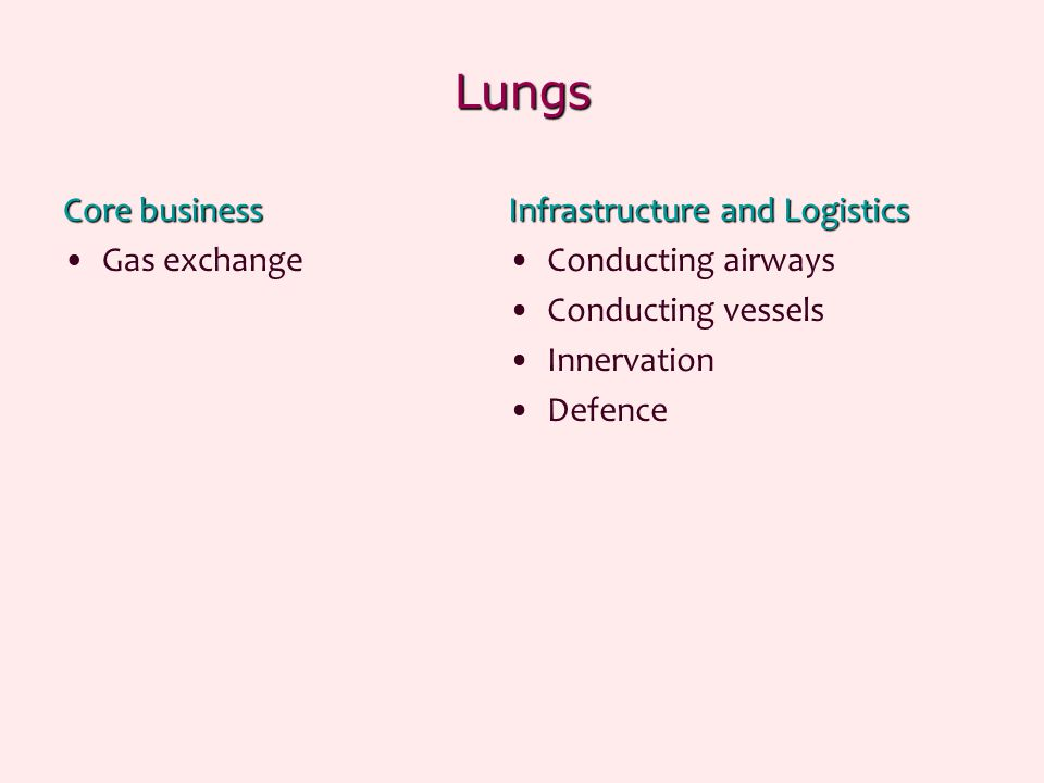 Lungs Core business Gas exchange Infrastructure and Logistics