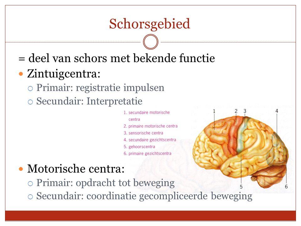Schorsgebied = deel van schors met bekende functie Zintuigcentra: