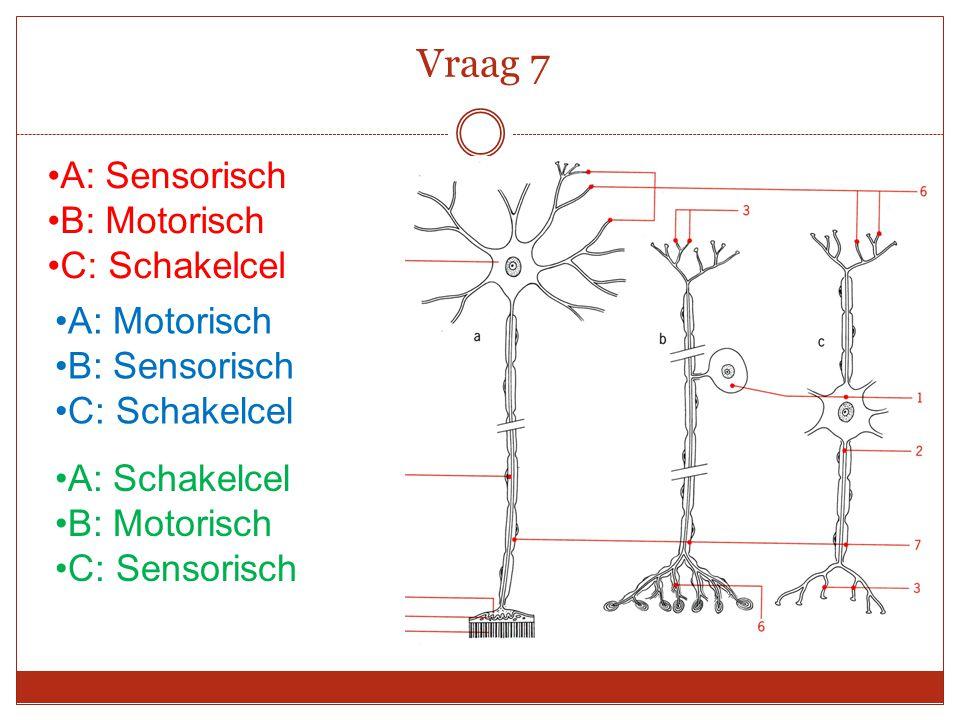 Vraag 7 A: Sensorisch B: Motorisch C: Schakelcel A: Motorisch