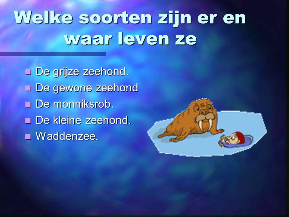 Zeehonden ppt video online download for Welke woonstijlen zijn er