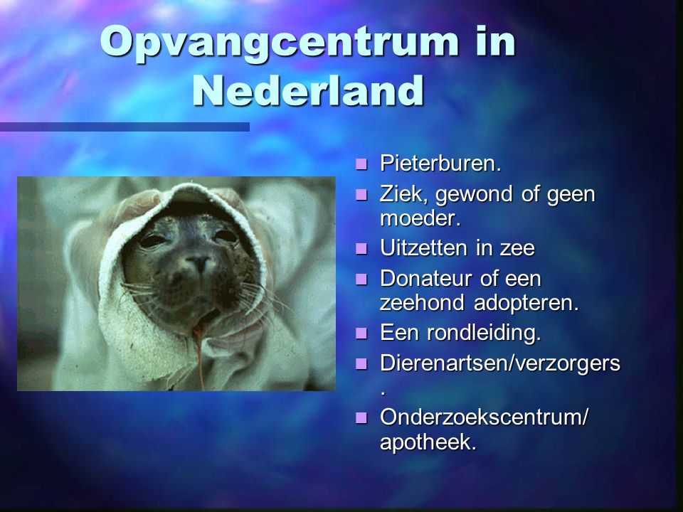Opvangcentrum in Nederland