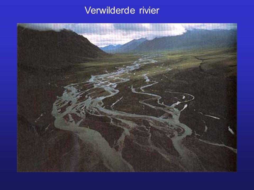 Verwilderde rivier