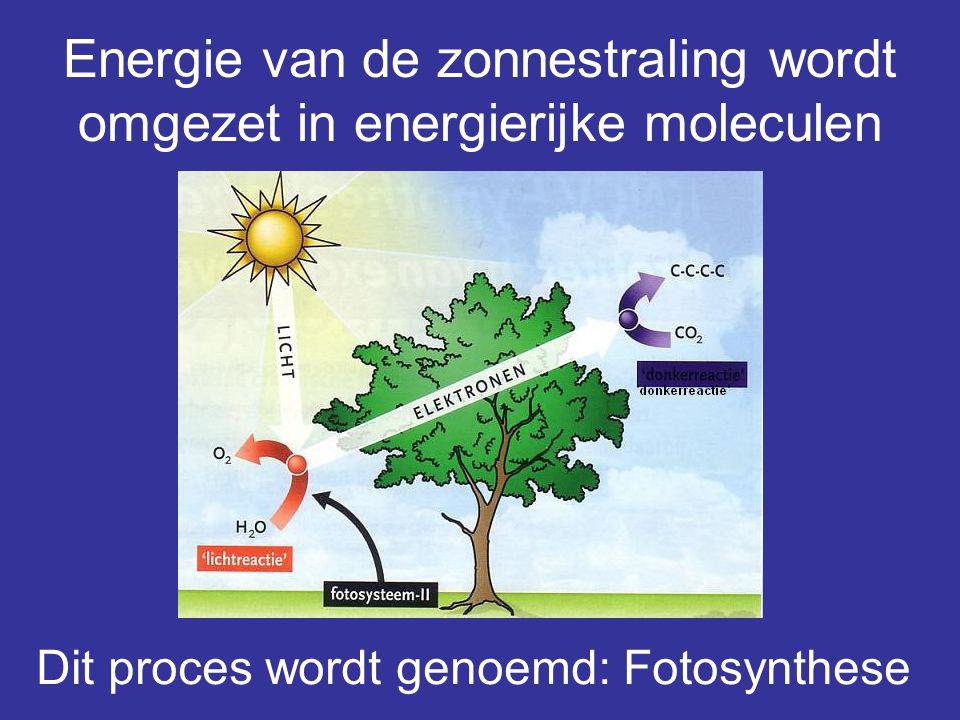 Energie van de zonnestraling wordt omgezet in energierijke moleculen