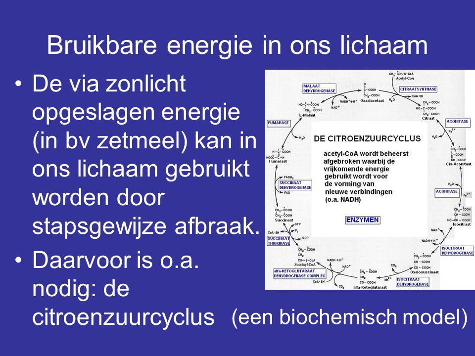 Bruikbare energie in ons lichaam