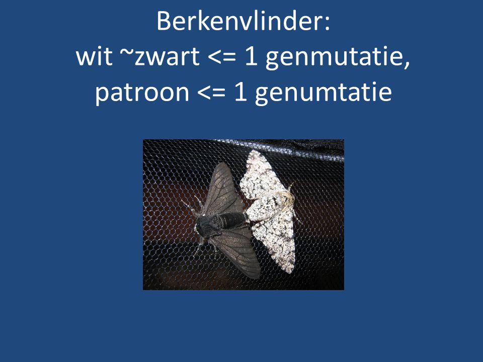 Berkenvlinder: wit ~zwart <= 1 genmutatie, patroon <= 1 genumtatie