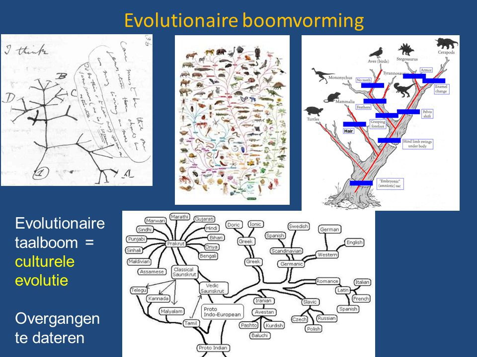 Evolutionaire boomvorming