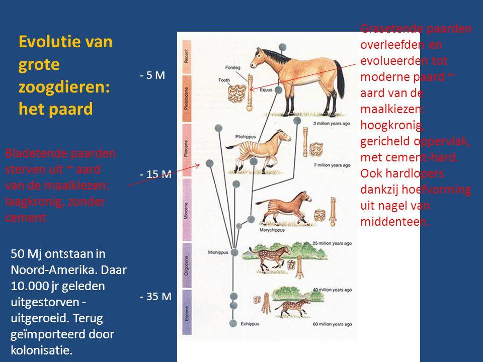 Evolutie van grote zoogdieren: het paard