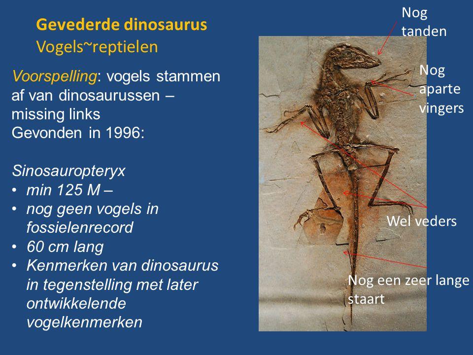 Gevederde dinosaurus Vogels~reptielen Nog tanden Nog
