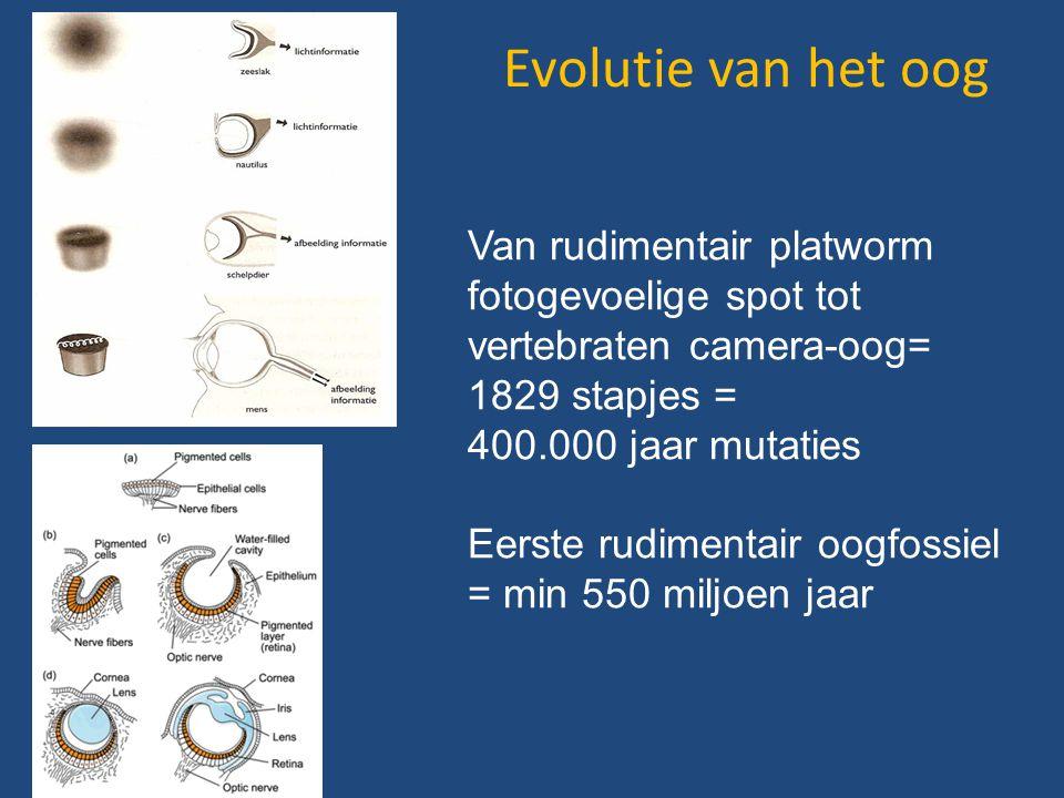 Evolutie van het oog Van rudimentair platworm fotogevoelige spot tot vertebraten camera-oog= 1829 stapjes =