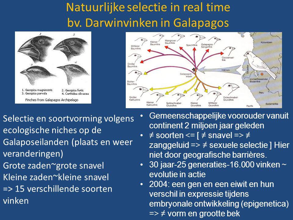 Natuurlijke selectie in real time bv. Darwinvinken in Galapagos