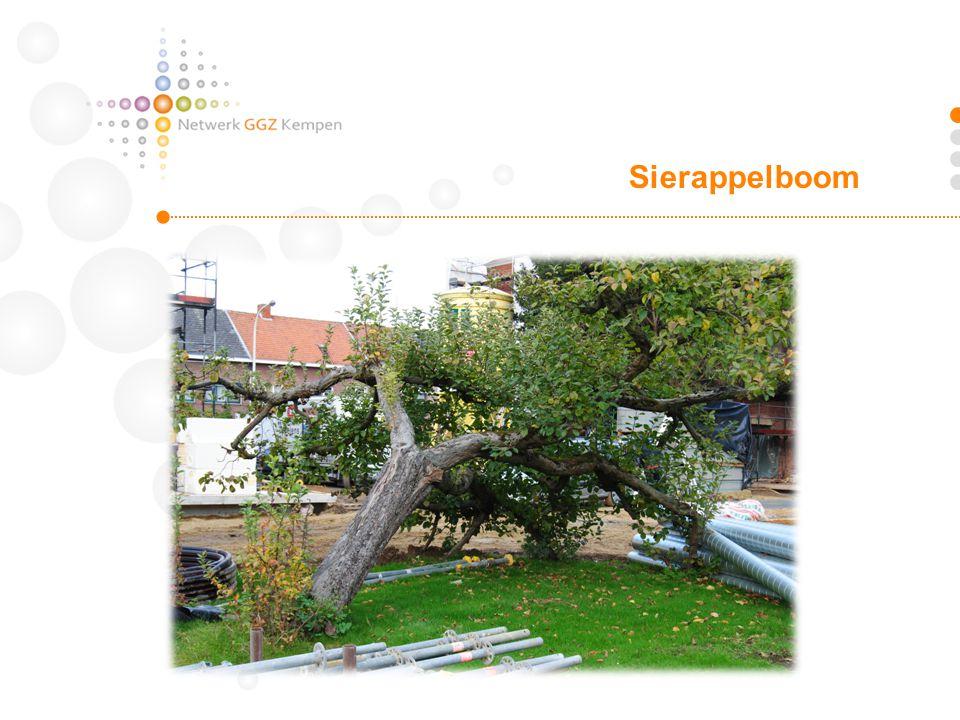 Sierappelboom
