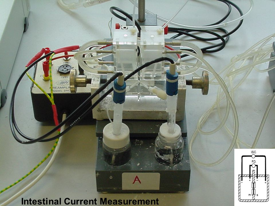 Intestinal Current Measurement