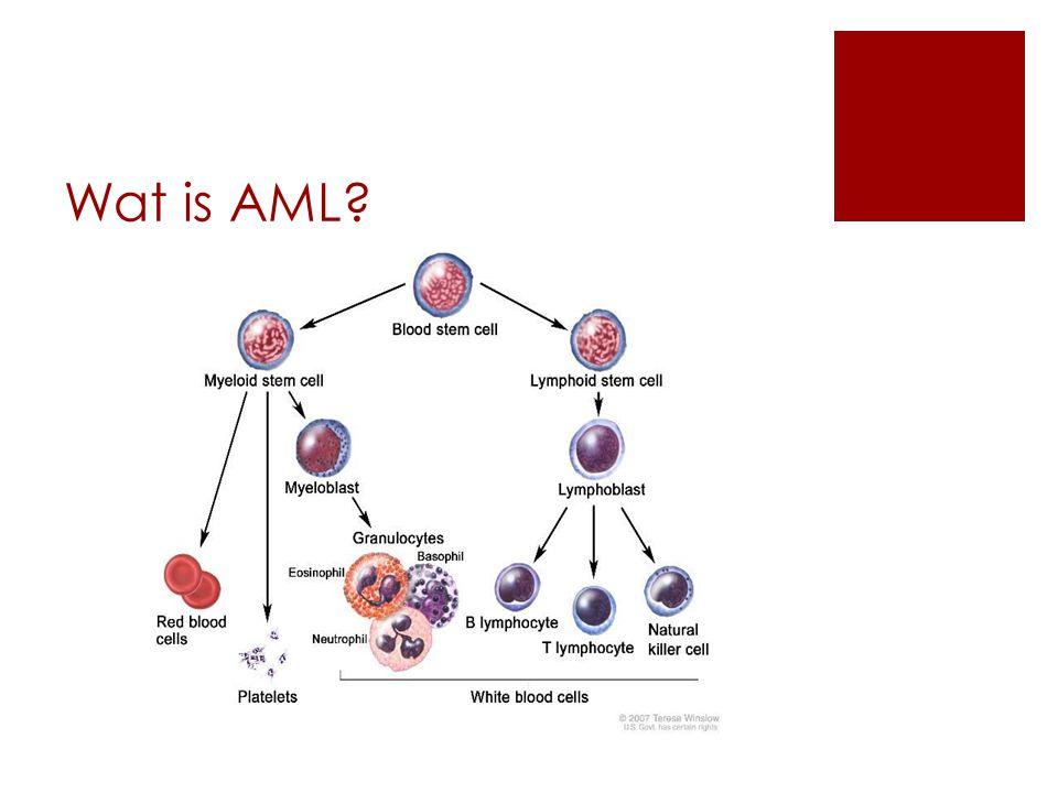 Wat is AML