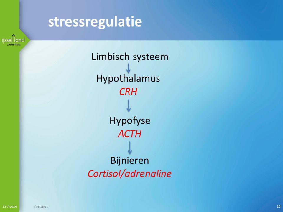 stressregulatie Limbisch systeem Hypothalamus CRH Hypofyse ACTH