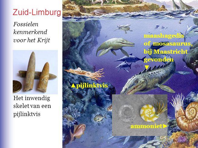 Zuid-Limburg Fossielen kenmerkend voor het Krijt maashagedis