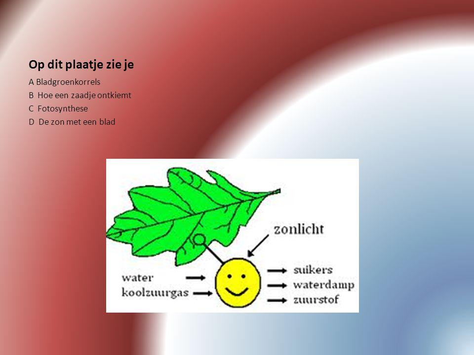 Op dit plaatje zie je A Bladgroenkorrels B Hoe een zaadje ontkiemt