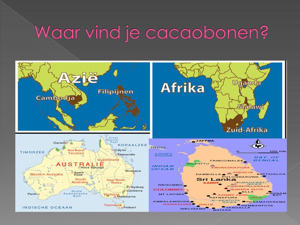 Waar vind je cacaobonen