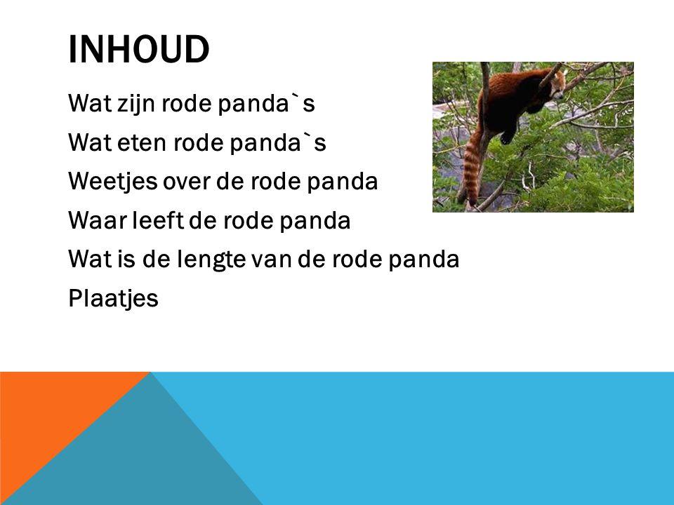 inhoud Wat zijn rode panda`s Wat eten rode panda`s Weetjes over de rode panda Waar leeft de rode panda Wat is de lengte van de rode panda Plaatjes